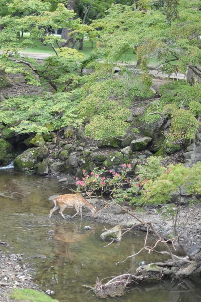 voyage blog nara japon