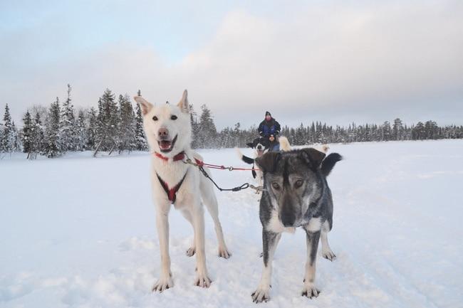 blog voyage laponie finlande