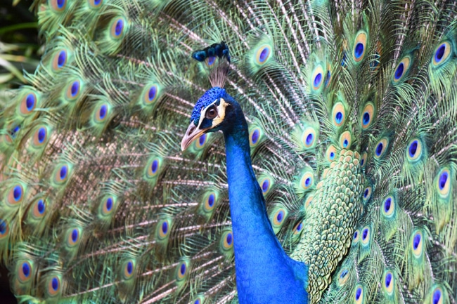 blog voyage kuala lumpur - bird park